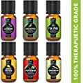 Essential Oils: Aromatherapy Essential Oil Set | Lavender, Tea Tree, Eucalyptus, Lemongrass, Orange, Peppermint | 100% ORGANIC Natural Formula | The Top 6 Most Popular Therapeutic Grade Oils on Amazon