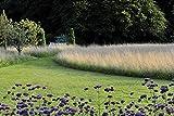 Image de Meine Vision wird Garten: Ganzjährig attraktiv - mit nachhaltigen Pflanzkonzepten für jeden Standort