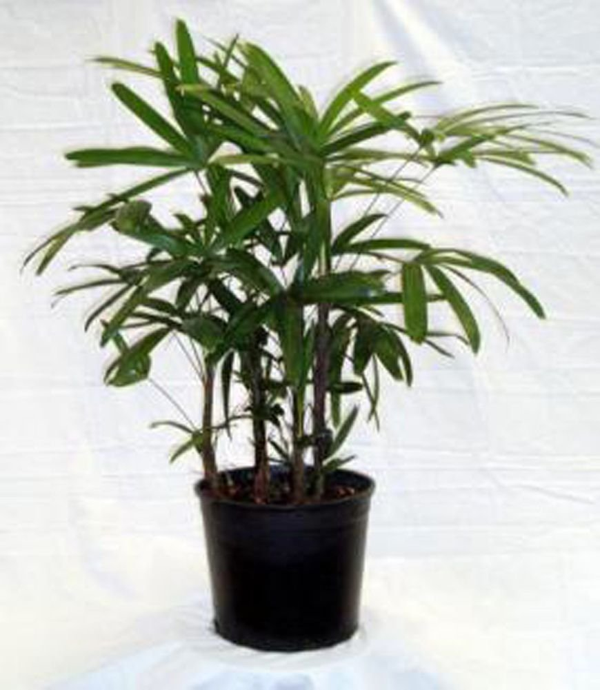 Exotic House Plants Archives Indoor Plant Tips Com