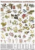 Schreiber Naturtafeln, Einheimische Nadelbäume und Sträucher