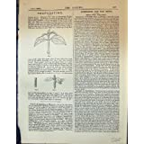 Propagación de la Impresión Antigua del Jardín 1878 Indica de las Hojas de las Plantas de la Azalea