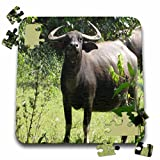 Angelique Cajams Safari Buffalos - Buffalos Thailand up close - 10x10 Inch Puzzle (pzl_26799_2)