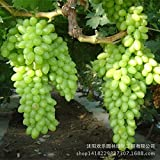 Sellify Generic Wholesale Green Grape Seed Sweet And Delicious Fruit Fruiting Bonsai Villa Grapes 50 Seeds/Pack