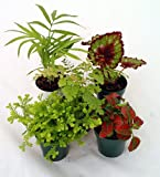 "Terrarium & Fairy Garden Plants - Assortment of 5 Different Plants in 2"" Pots"