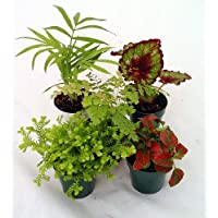 Terrarium & Fairy Garden Plants - 5 Different Plants + Spanish Moss in 2