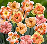 Butterfly Daffodil Blend - Deer/Rodent Resistant - 10 Bulbs 14/16 cm