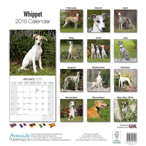 Whippet 2015 (Square)