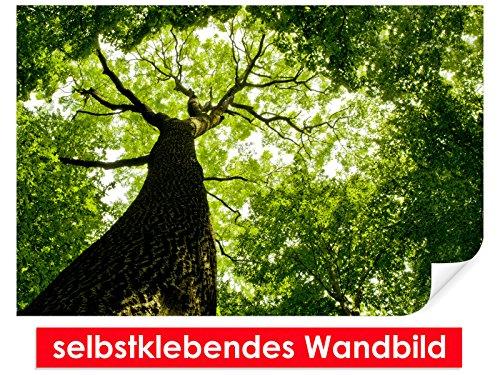 selbstklebendes-wandbild-sunlight-tree-leicht-zu-verkleben-wallprint-wallpaper-poster-vinylfolie-mit