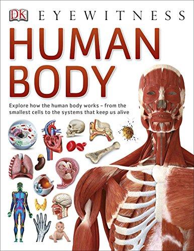 Human Body (Eyewitness)