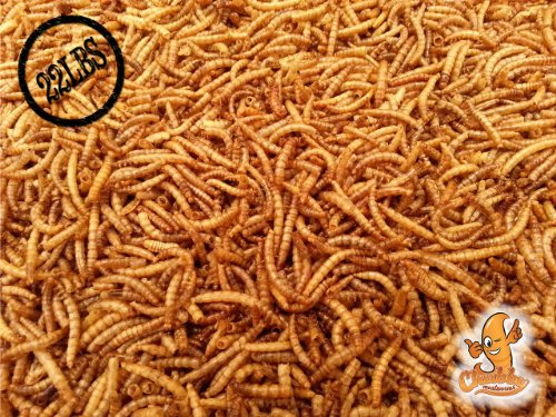 22 Lbs Chubby Dried Mealworms for Wild Birds etc. approx. 352,000 Mealworms