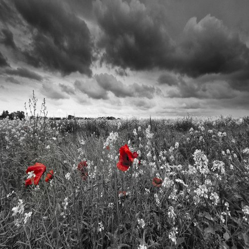 Amazon.com: BLACK AND WHITE LANDSCAPE WITH RED COLOR POP