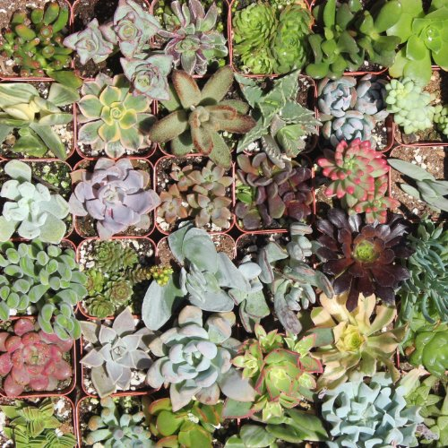 20 Gorgeous Succulents in 2