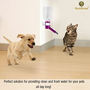 SunGrow Cat Water Bottle, No Drip Pet Dispenser Bottle, with Stainless Steel Sucker, Easy to Install in Cage, Crate, 10-Ounce