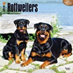 Rottweilers 2016 Square 12x12 Wall Ca...
