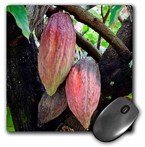 Danita Delimont - Fruits - CocoPods, Cocoa tree, Dominica - MousePad (mp_226564_1) (Cocoa Fruit compare prices)