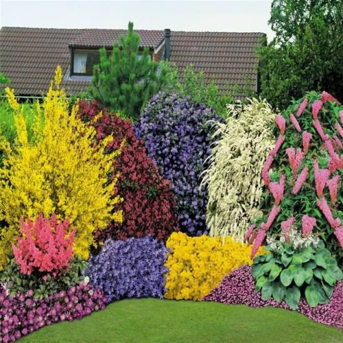 10-x-mixed-established-garden-shrubs-p9-pots-not-plug-plants