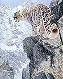 61sw42RiaZL. SL160 On The Edge RICHARD STANLEY ON THE EDGE SNOW LEOPARD 16X20 WILDLIFE ART PRINT WRT102 16