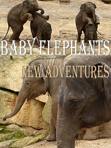 Baby elephants. New adventures