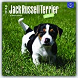 Jack Russell Terrier Puppies 2017 Square