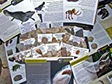 IMPROVED CONTENTS LOWEST EVER PRICE *FREE SHIPPING DIRECT FROM AMAZON US* - Genuine Dinosaur and Fossil Collection - NEW 25 Piece Collectors Gift Set of Fossils - Dinosaur Bone + Shark Teeth and More - Labels, Certificates of Authenticity and Information Sheet - Set 2