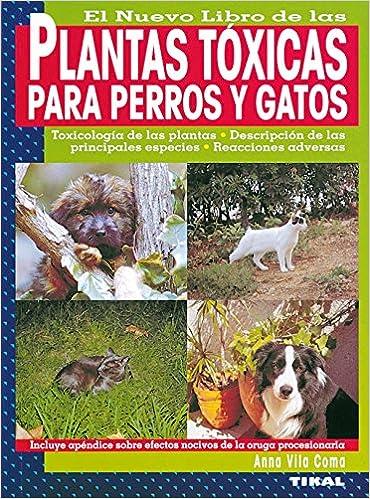 Plantas toxicas para perros y gatos plantas t xicas para for Plantas toxicas gatos
