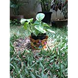 The Garden Store Tin Planter Small Orange