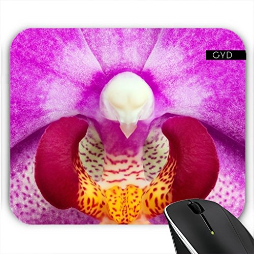 muismat-falena-orchidea-by-carsten-reisinger