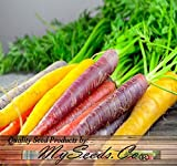 Search : BIG PACK x Organic Rainbow Mix Carrot (1,000+) Seeds - Atomic Red, Bambino Orange, Cosmic Purple, Lunar White and Solar Yellow - By MySeeds.Co