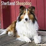 Shetland Sheepdog Calendar 2017