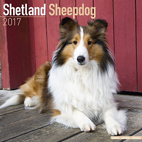 Shetland Sheepdog Calendar 2017 - Sheltie - Dog Breed Calendars - 2016 - 2017 wall calendars - 16 Month by Avonside