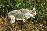 Edge Innovative Hunting Yote Coyote Hunting Decoy