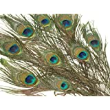 Peacock Feathers - 10pk