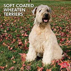 "Wheaten Terriers, Soft Coated 2013 Wall Calendar 12"" X 12"""