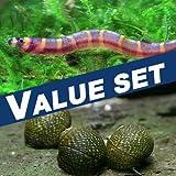 【バリューセット】▼クーリーローチ(約4-5cm)(5匹)+石巻貝(10匹)[生体]