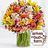 200 Blooms of Birthday Peruvian Lilies Bouquet - Flowers