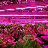 Pack-of-5XJLED-led-strip-2015-New-05m-Streifen-5W-LED-wachsen-Licht-Bar-flexibel-DC12V-Pflanzenleuchte-LED-Pflanzenlampe-Pflanzen-Wachstumslampe-Pflanzenlicht-Gartenbau-Gewchshaus-wachsen-Lampe-wirkli