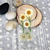 SSummer Yellowish and White Daisy and Yellowish Lavender and Leaf Handmade Real Dried Pressed Flowers Case for iPhone 5 / 5s,iPhone 6 4.7 / iPhone 6 Plus 5.5