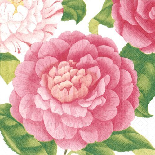 Dinner Napkins Paper Napkins Baby Shower Bridal Shower Wedding Birthday Party Camellias Pk 40 by Caspari