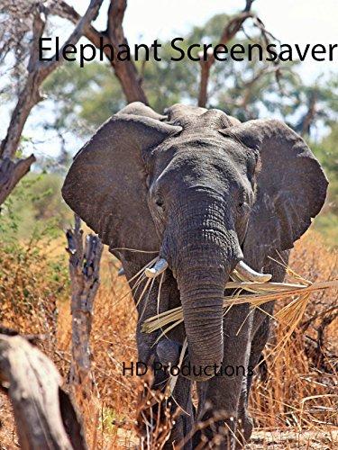 Elephant Screensaver on Amazon Prime Instant Video UK