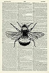 Bee ART PRINT - VINTAGE ART PRINT - Animal Art Print - BLACK & WHITE ART PRINT - Illustration - Insect Picture - Vintage Dictionary Art Print - Wall Hanging - Home Décor - Book Print 22D