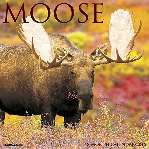 2016 Moose Wall Calendar
