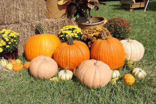 harvest-theme-5x3ft-lfeey-thin-vinyl-photography-background-pumpkins-flowers-and-straw-scene-backdro
