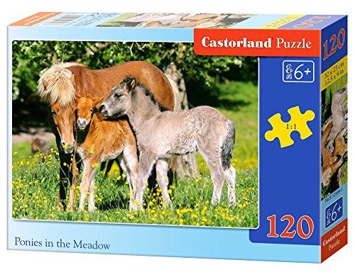 Ponies in grassland