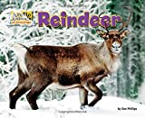 img - for Reindeer (Arctic Animals: Life Outside the Igloo) book / textbook / text book