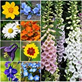 Search : Bulk Package of 30,000 Seeds, Partial Shade Wildflower Mixture (15 Species) Non-GMO Seeds By Seed Needs