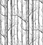 Wallmonkeys Background from Birch Trees without Leaves Peel and Stick Wall Decal, 48-Inch Height by 46-Inch Width