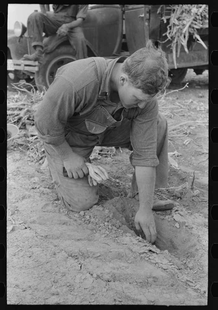 Sheridan County, Kansas, farmer digging in the dirt to see how deep the moisture is