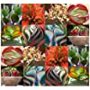 15 x Kalanchoe Species Mix - Rare Fresh Seeds - SUCCULENT Leaves Can Form Entire Plant - Various Shades and Colors - Inflorescence Orange Blooms - Excellent Greenhouse or House Plant - By MySeeds.Co