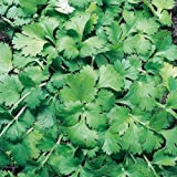Suttons Seeds 164650 Coriander Herb Seed