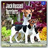 Jack Russell Terriers 2017 Square (Multilingual Edition)